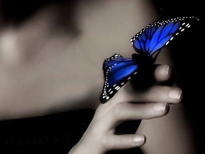 mariposa-azul1