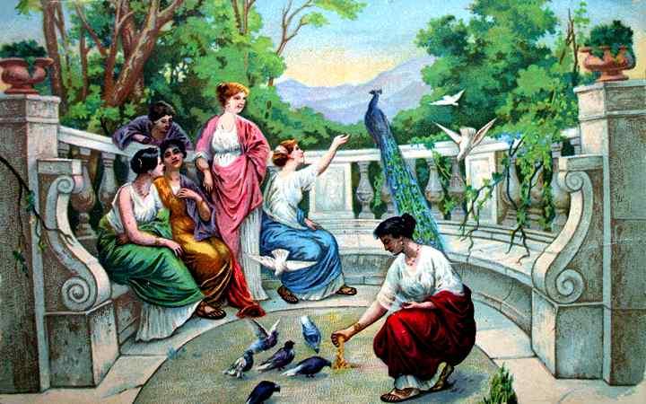 aves y humanos
