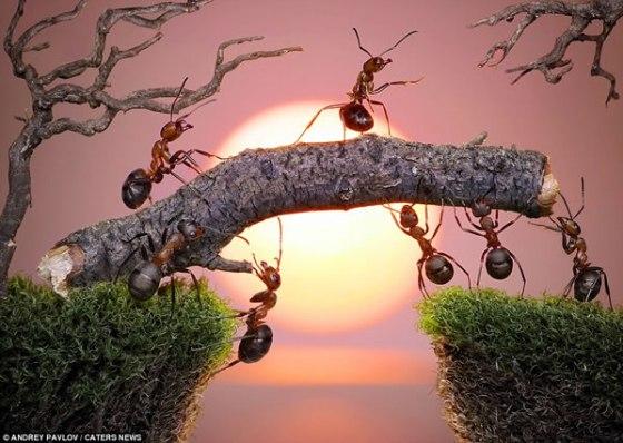 hormigas-atardecer-amor-sentimientos