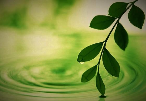 green-spring-leaf-1998511-h