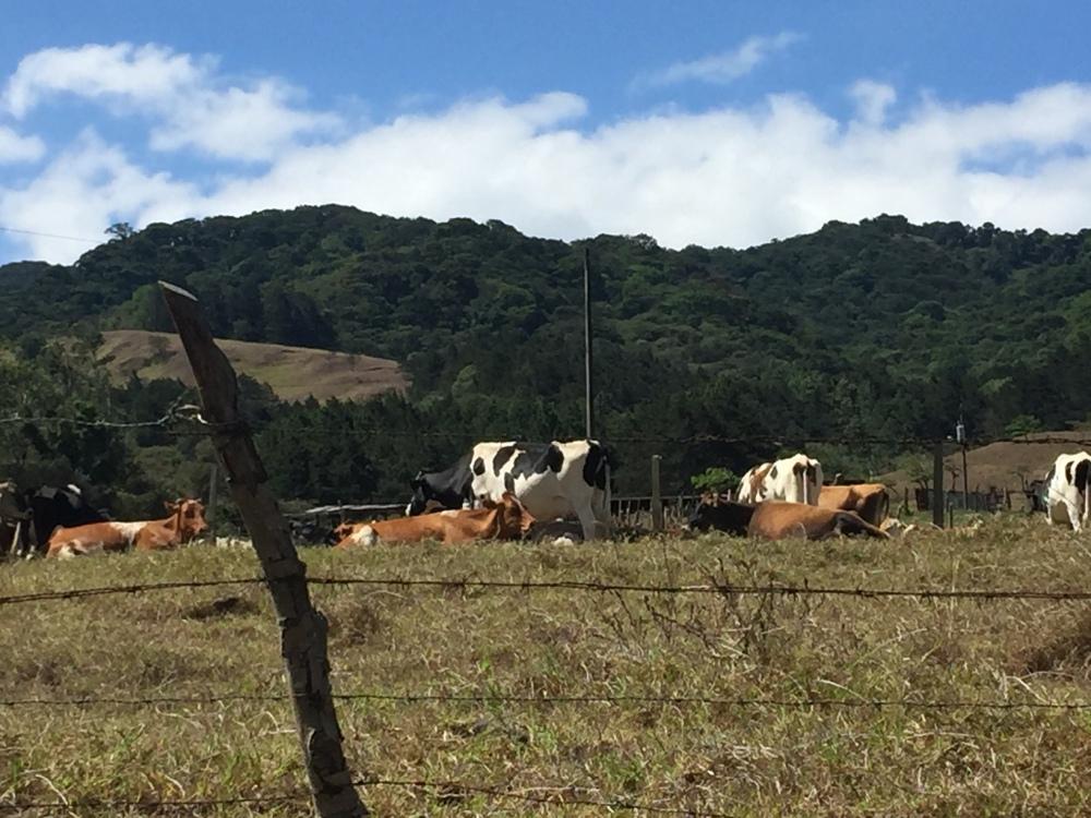 Conferencia de vacaS